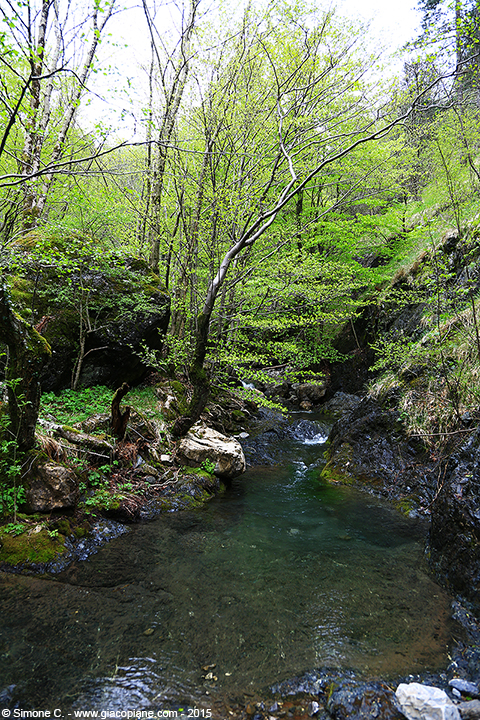 Torrente Sturla - (Sturla river not far from its source)